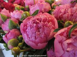 Popular Sedona Wedding Flowers